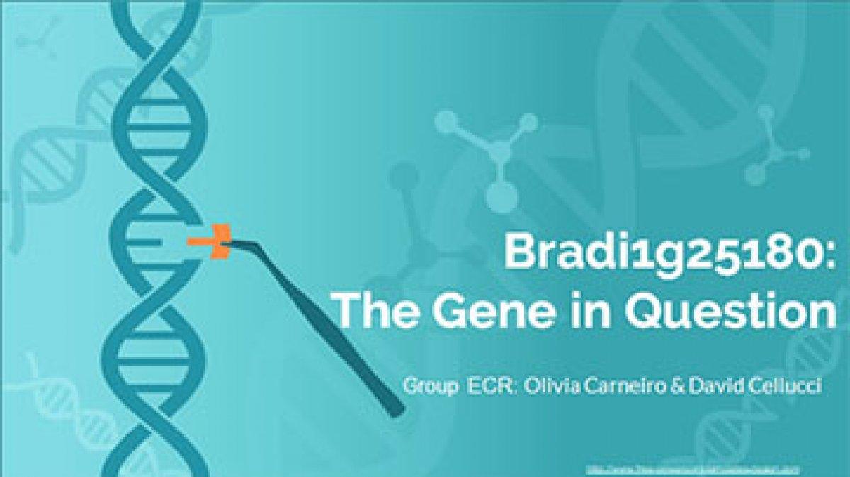 Bradi1g25180:  The Gene in Question