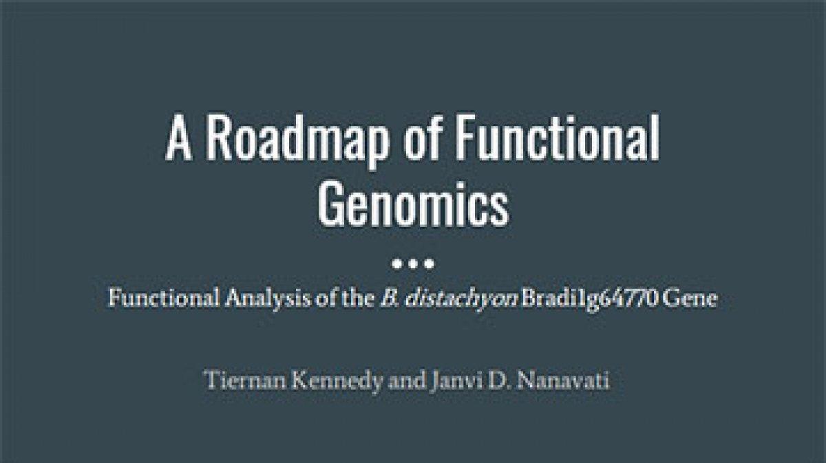 A Roadmap of Functional Genomics: Functional Analysis of the B. distachyon Bradi1g64770 Gene