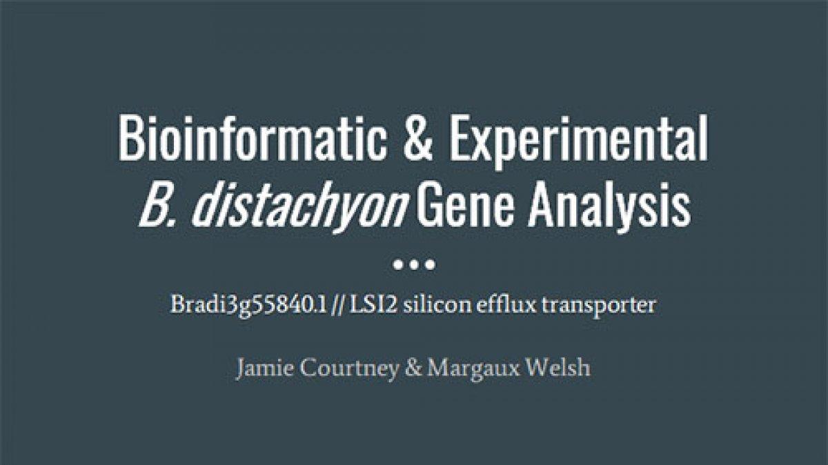 Bioinformatic & Experimental  B. distachyon Gene Analysis