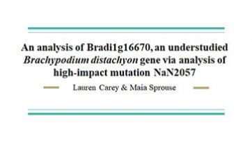 An analysis of Bradi1g16670