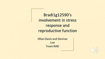 Bradi1g12590's involvement in stress response and reproductive function