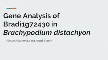 Gene Analysis of Bradi1g72430 in Brachypodium distachyon
