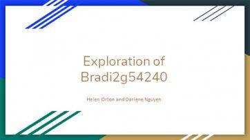 Exploration of Bradi2g54240